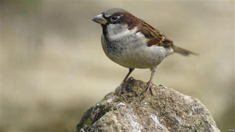 bbc news in pictures tit species up in norfolk garden