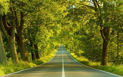 green forest road tree naturally desktop