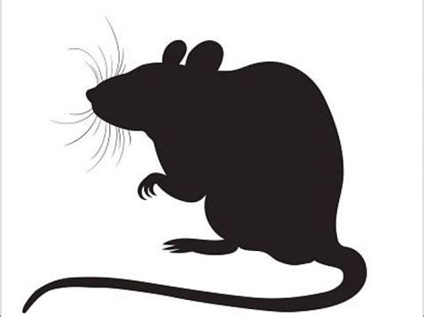 rat clipart  clipart  dumielauxepicesnet