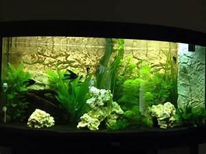 Aquarium Einrichten 60l : 60 l aquarium einrichten und die kosten daf r images frompo ~ Michelbontemps.com Haus und Dekorationen