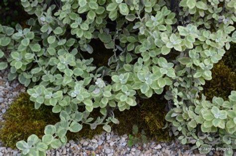plante tombante exterieur plein soleil obasinc