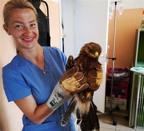 Ārsts ārstē cilvēku, veterinārārsts - cilvēci   Lauku tīkls
