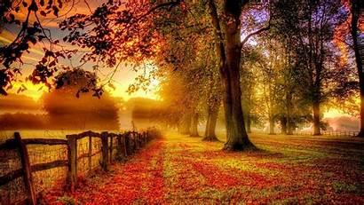Autumn Fall Background Widescreen Earth