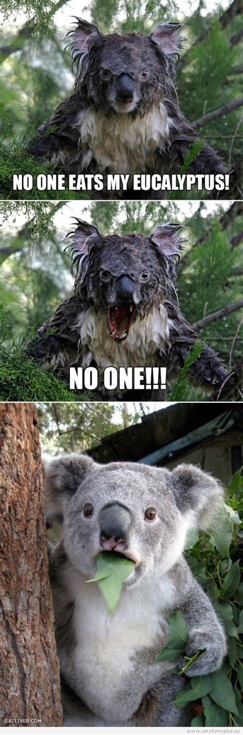 koala funny sayings funny pictures animals