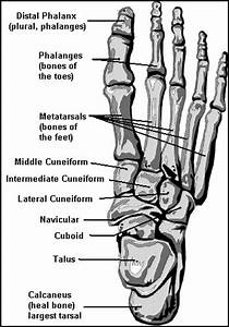 Bones In The Foot