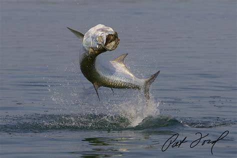 tarpon fishing florida pat ford skifflife secrets skiff