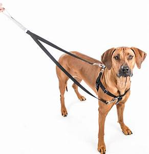 2 Hounds Design Freedom No Pull Dog Harness and Leash ...