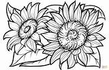 Sunflower Coloring Sunflowers Pages Printable Flowers Svg Flower Clipart Adults Library Sheets Adult Supercoloring Drawing Books sketch template