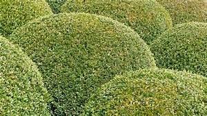 Wann Buxbaum Schneiden : buchsbaum schneiden wann ist der perfekte zeitpunkt ~ Lizthompson.info Haus und Dekorationen