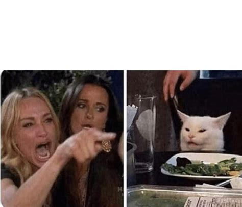meme generator woman yelling pointing  cat