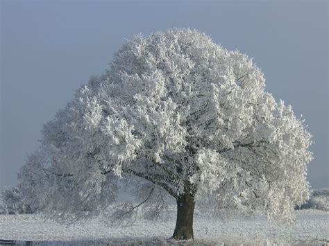 stock image tree winter 02 by for sale on deviantart