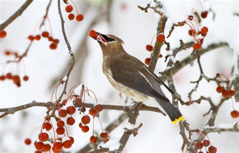 volunteers brave cold wind  annual christmas bird