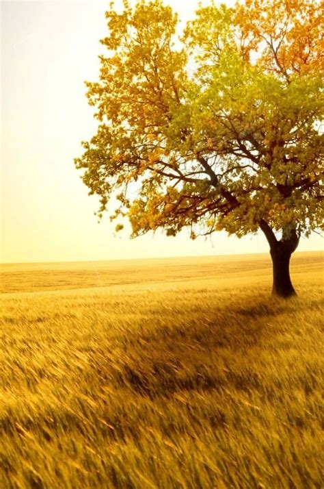 Green And Gold Tree Wallpaper by 17 Best Images About Mustard On Persnickety