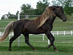 Unusual Horse Colors   Pics