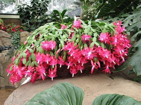 plantes grasses en 26 id 233 es jolies et adaptatives