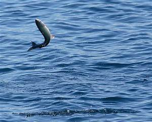 Fish Jumping Out Of Water Pictures