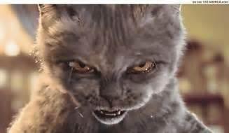 vire cat mescanefeux 187 mon chat m a vir 233 de chez moi