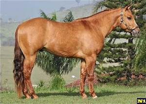 Quarter Horse - stallion Pocodo Dun It | Quarter Horse ...