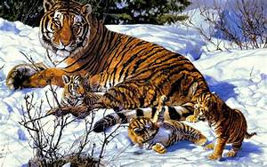 Descargar la imagen en teléfono: Animales, Tigres, Imágenes, gratis 37392