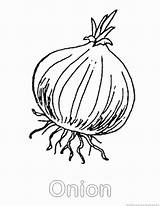 Onion Vegetable Coloring sketch template