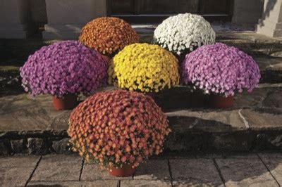 plantes d ext 233 rieur automne hiver