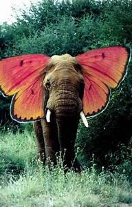 elephant backgrounds | Tumblr
