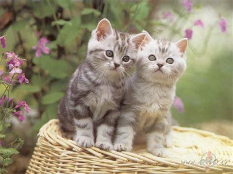 Kaķēni foto | Foto.oHo.lv