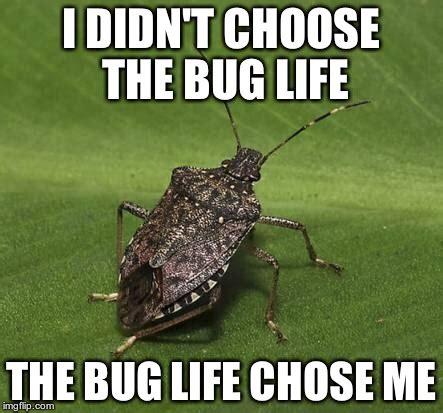 Bug Memes - stink bug imgflip