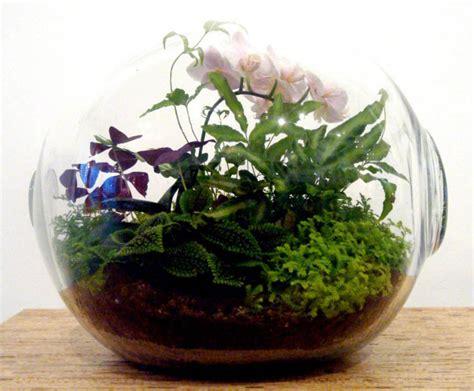 terrarium design crooked nest s terrariums bring the serenity of a garden to any room inhabitat green design