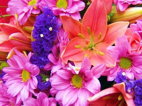 Spring Flowers Screensavers Wallpaper