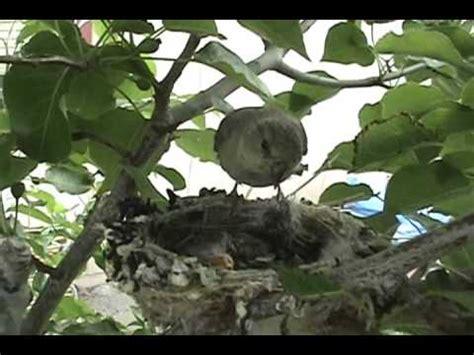 Backyard Bird Habitat by Certified Wildlife Habitat Backyard Bird Nest