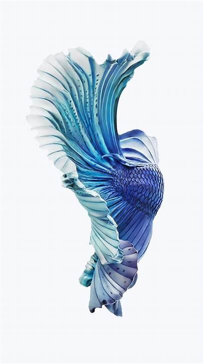 Fish Iphone Wallpapers Pixelstalk