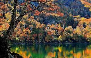 Chile, Lake, Trees, Fall, Mountain, Forest, Water, Nature