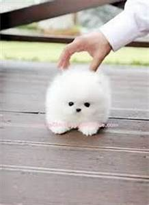 Best 25+ Cute small dogs ideas on Pinterest | Small puppy ...