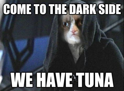 Star Wars Cat Meme - 9 reasons star wars needs grumpy cat
