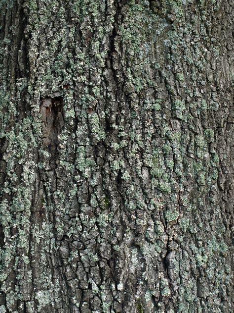 tree bark texture photo gallery