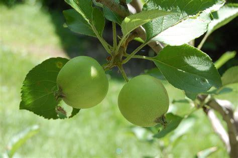 Caspar's Blog Fruit Trees Are Back