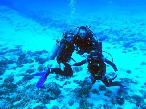 Best Dive Spots In The Caribbean by The Best Dive In The Caribbean Underwater Cruise