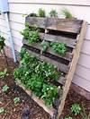 Pallet Gardening | innovativegardening pallet planter vertical garden