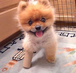 puppy-cute-baby | cute puppies pictures