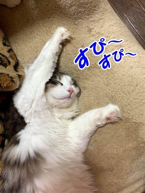 寝 てる 時 ビク っ て なる
