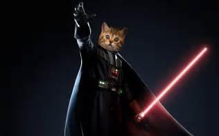 cat war darth vader cat wars catsstar wars cats