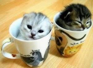 Top 10 Unusual Cat Breeds - Listverse