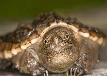 amphibians  reptiles patrick zephyr photography