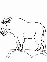 Goat Mountain Outline Coloring Drawing Pages Easy Printable Lion Clipart Template Luna Boer Getdrawings Sketch Getcolorings Colorluna sketch template
