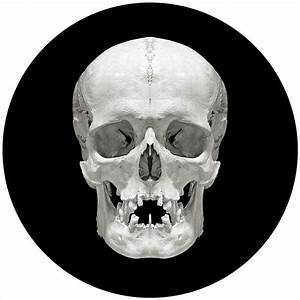 Are Human Skulls Beautiful  David Orr Uses Mirrors To Find