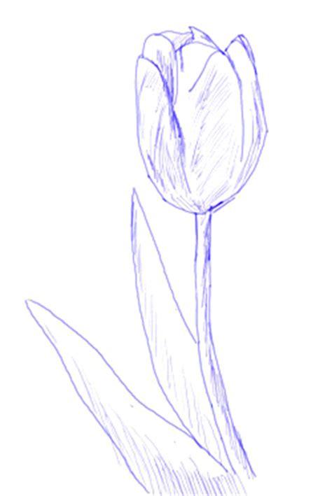 draw  tulip draw step  step