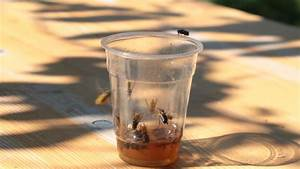 Wespenfalle Selber Bauen : wespenplage im sommer auf dem bauernhof farmticker ~ Markanthonyermac.com Haus und Dekorationen