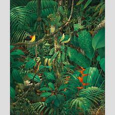 Anderson Debernardi  Art  Tropical Pinterest