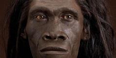 Laziness Led to Homo Erectus Extinction, Controversial ...
